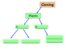 Embryo cloning lesson presentation and activity
