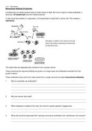 1.6-7 Monoclonal Antibody Production worksheet.docx