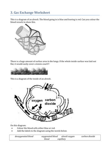 Respiratory System By Khartog Teaching Resources Tes