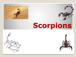 Scorpion facts