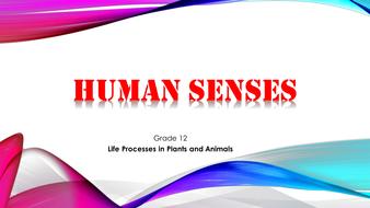 Human senses.pptx