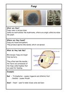 L1 Fungi.docx