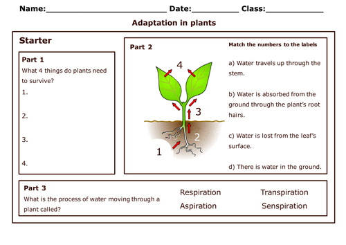 {AQAB14 Adaptation for survival Part 1 by WonderCaliban – Plant Adaptations Worksheet