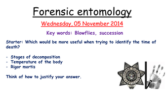 Edexcel forensic entomology