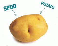 spud  . .  potato.jpg