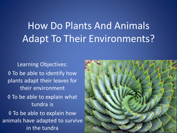 How Do Plants Adapt To Their Environments.pptx