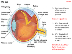 Structure and functions of the eye