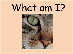 Who am I? - animal guessing game
