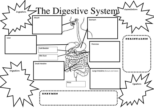 Structure and Function of Digestive System by