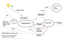 Photosynthesis and respiration process diagram by grahamhull photosynthesis and respiration process diagram ccuart Images