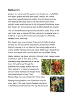 Rainforest information.docx