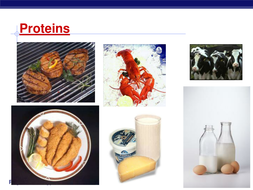 Protein Guided Notes and Handout