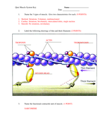 Quiz 1 Muscle System KEY.doc