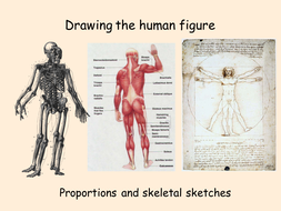 The Human Figure- Proportions & Skeleton Sketches