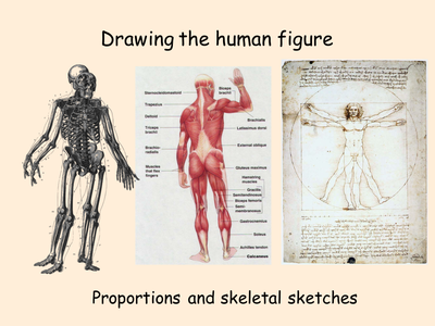 Drawn to Art: The Human Figure - Proportion & Skeleton Sketches