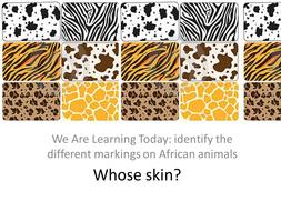 Identify the animal