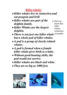 whales Homework.doc
