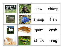 Matching pairs words and pictures