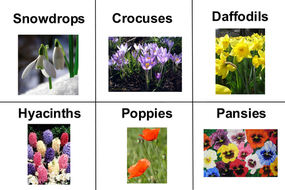 Matching Pairs / Flashcards - Flowers