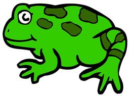 green_frog_image.jpg