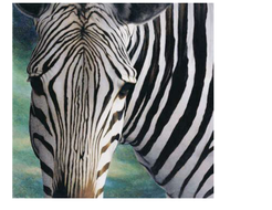 English Langauge Arts zebra[1].doc