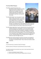 Comprehension - Duck Billed Platypus