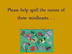 bug spelling