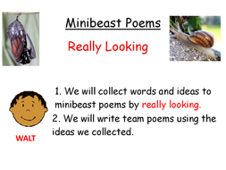Minibeast - modelling building a poem.ppt