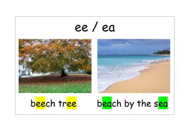 Poster - Beech tree - Beach by the sea.doc