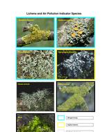 photos_of_lichens[1].doc
