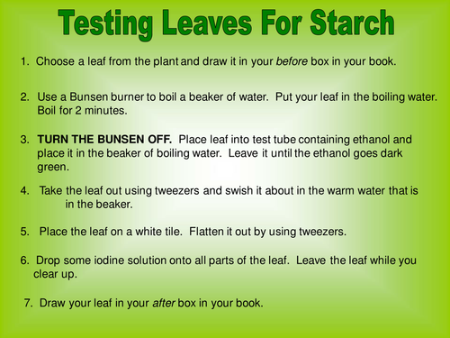 Testing leaves for starch by TeachBiology Teaching Resources TES – Photosynthesis Diagram Worksheet Answers