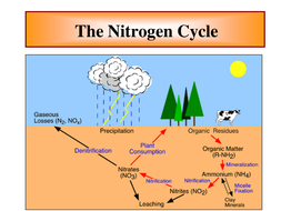 The nitrogen cycle.ppt