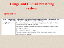 Lungs and lung diseases1.ppt