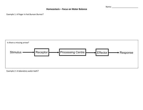 Homeostasis water balance introduction by jhayward2 Teaching – Homeostasis Worksheet