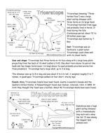 dinosaur_info[1].doc