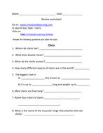 Bivalve worksheet - clams and oysters