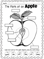 freebie-applediagram.pdf