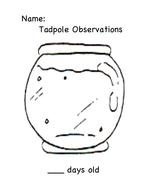 Tadpole Observation Recording Sheet