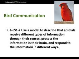 Bird Communication.pptx