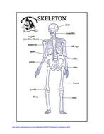 Skeleton handout.docx