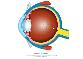 How the eye creates vision - Interactive Eye