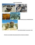 Stromatolite In Class Handouts.docx