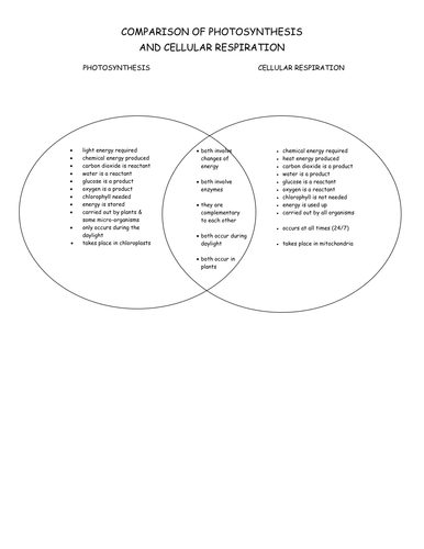 Photosynthesis Cellular Respiration Diagram Worksheet | Periodic ...