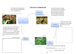 Life-Cycle-of-a-Flowering-Plant.docx