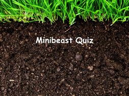 Minibeast 'Who am I?' quiz