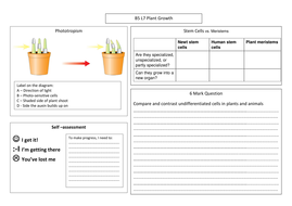 B5-7-Placemat-Plant-Growth.docx