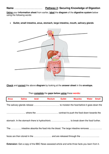 Year 8 introduction to digestion full lesson by robertbrooks year 8 introduction to digestion full lesson by robertbrooks teaching resources tes ccuart Gallery