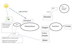 photosynthesis mindmap no arrows.docx