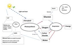 photosynthesis and respiration process diagram