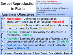 Sexual Reproduction in Plants - Lesson.pptx